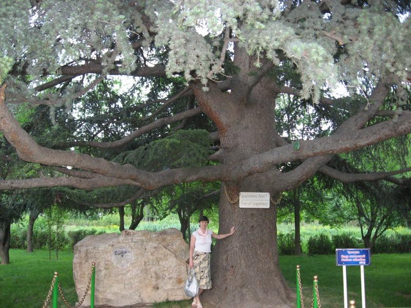В ботаническом саду Душанбе. Дерево счастья.