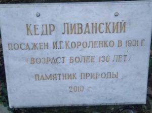 Кедр на территории музея